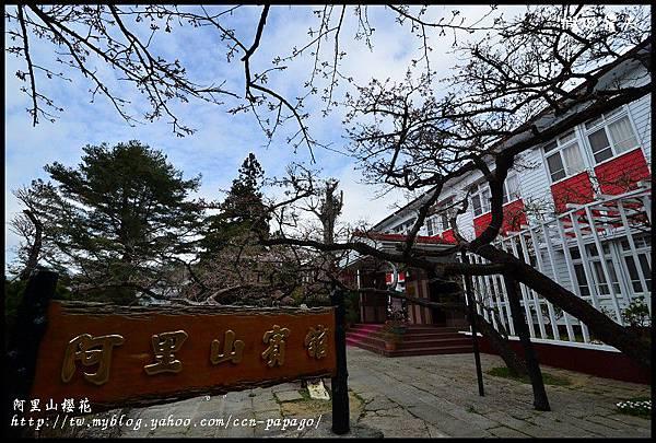 阿里山櫻花DSC_4300