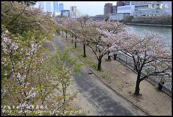 大阪自由行-造幣局櫻花_DSC8821