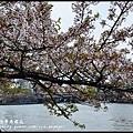 大阪自由行-造幣局櫻花_DSC8828
