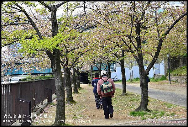 大阪自由行-造幣局櫻花_DSC8830
