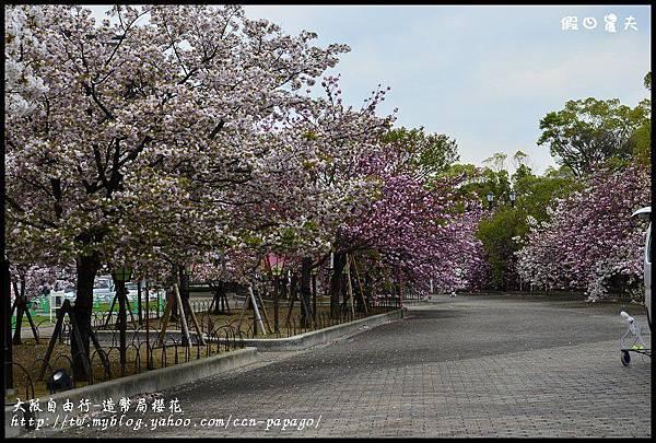 大阪自由行-造幣局櫻花_DSC8844