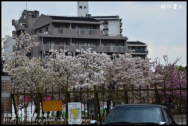 大阪自由行-造幣局櫻花_DSC8842