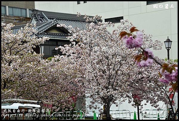 大阪自由行-造幣局櫻花_DSC8855