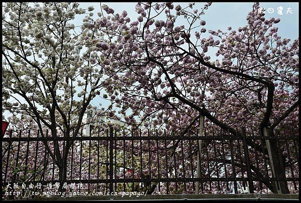 大阪自由行-造幣局櫻花_DSC8858
