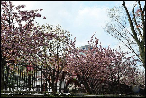 大阪自由行-造幣局櫻花_DSC8883