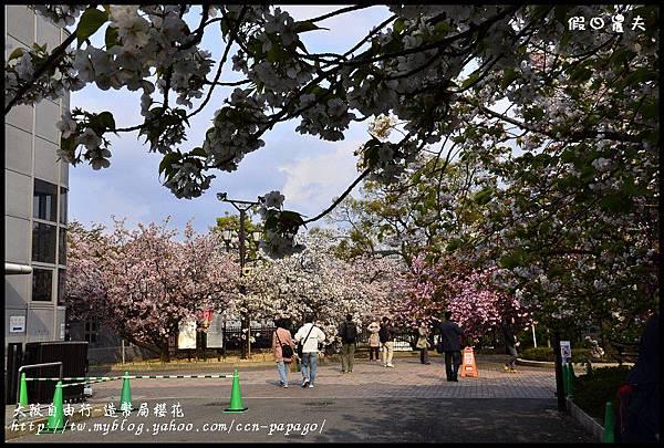 大阪自由行-造幣局櫻花_DSC8910