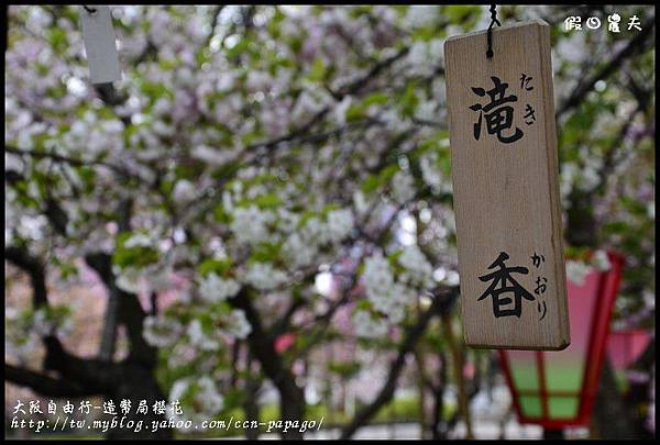 大阪自由行-造幣局櫻花_DSC8906