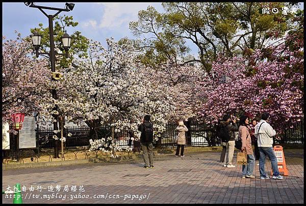 大阪自由行-造幣局櫻花_DSC8912