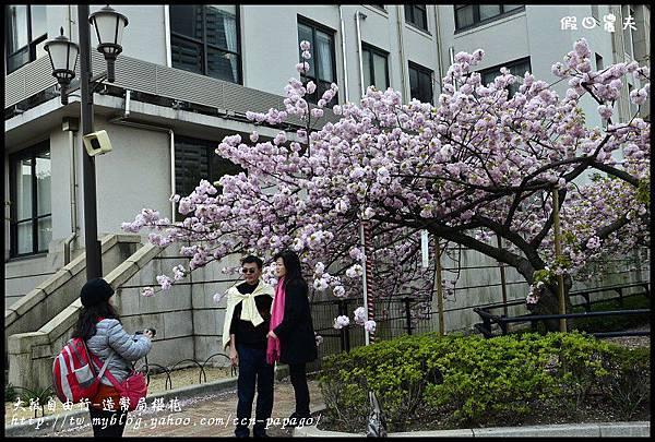大阪自由行-造幣局櫻花_DSC8932