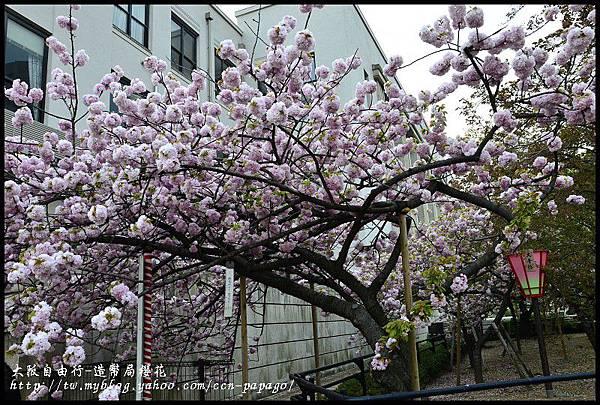 大阪自由行-造幣局櫻花_DSC8934