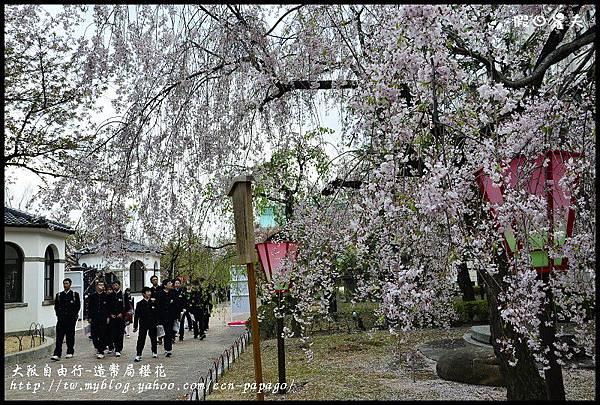 大阪自由行-造幣局櫻花_DSC8942
