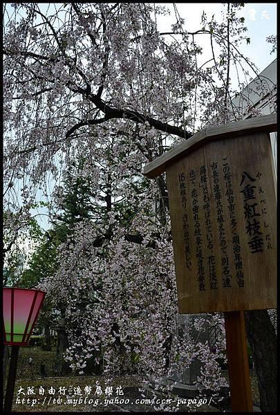 大阪自由行-造幣局櫻花_DSC8946