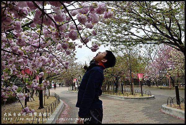 大阪自由行-造幣局櫻花_DSC8970