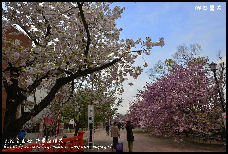 大阪自由行-造幣局櫻花_DSC9022