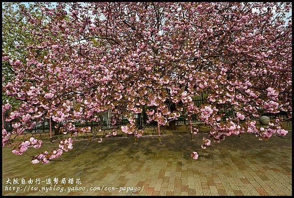 大阪自由行-造幣局櫻花_DSC9039