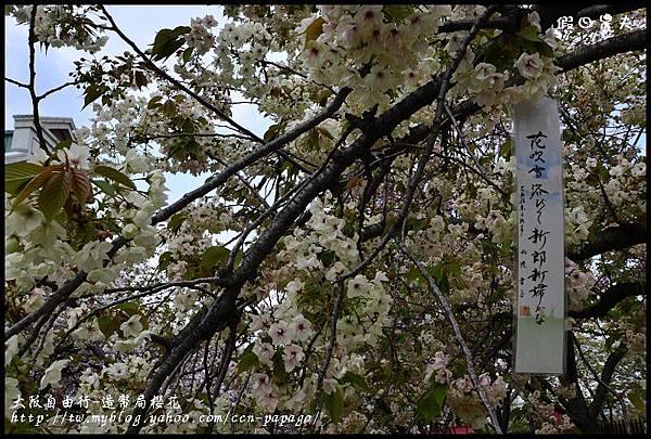 大阪自由行-造幣局櫻花_DSC9043