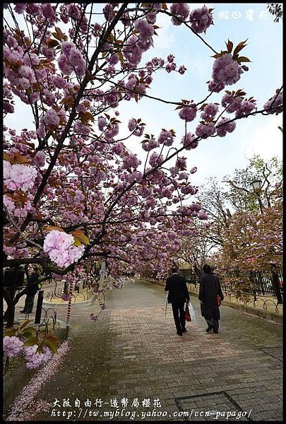 大阪自由行-造幣局櫻花_DSC9053