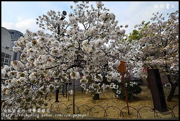 大阪自由行-造幣局櫻花_DSC9067