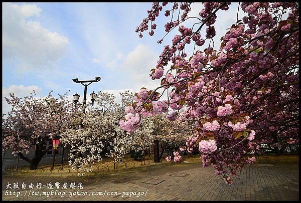 大阪自由行-造幣局櫻花_DSC9074