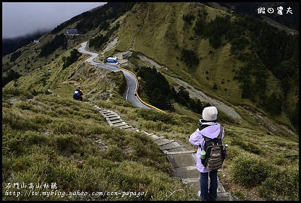 石門山高山杜鵑_DSC2433