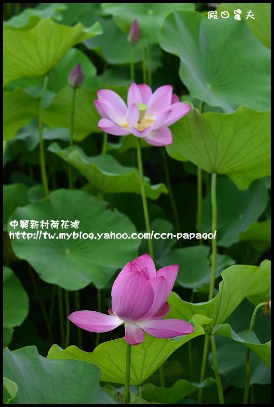 中興新村荷花池_DSC4841
