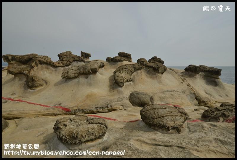 野柳地質公園_DSC3828