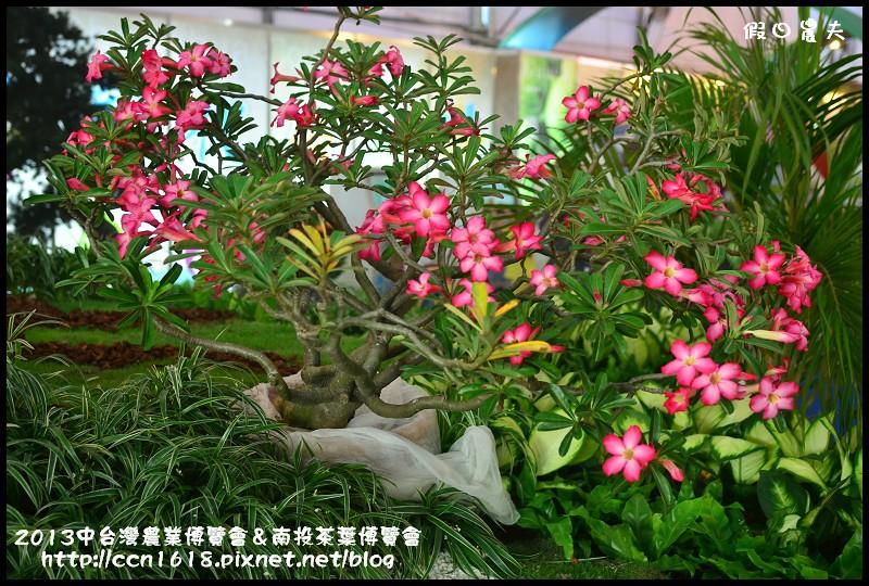 2013中台灣農業博覽會&南投茶葉博覽會DSC_2896