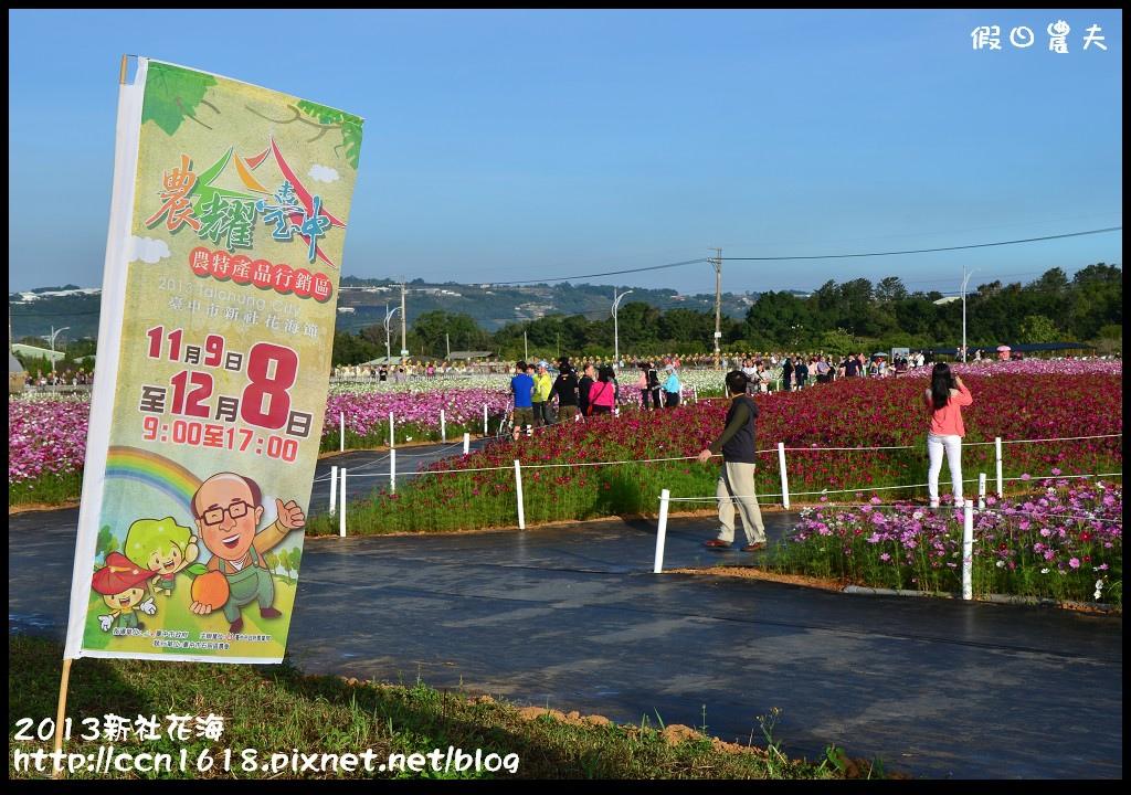 2013新社花海DSC_0012