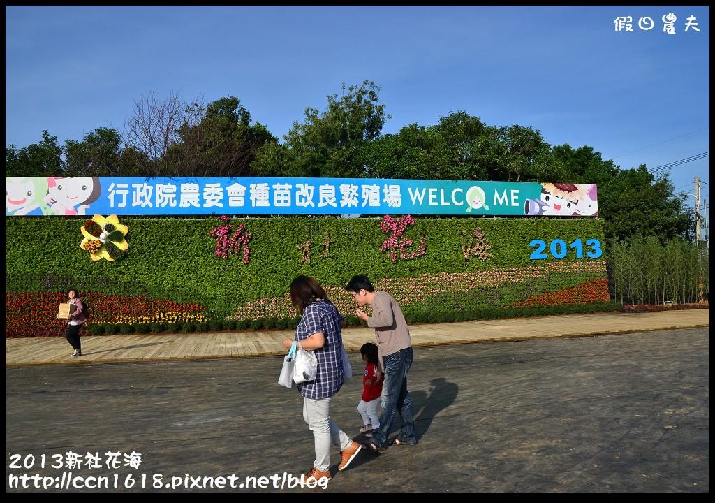2013新社花海DSC_0047