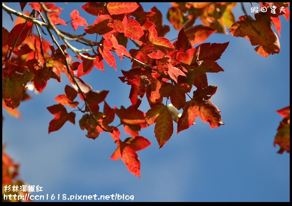 杉林溪楓紅DSC_0591
