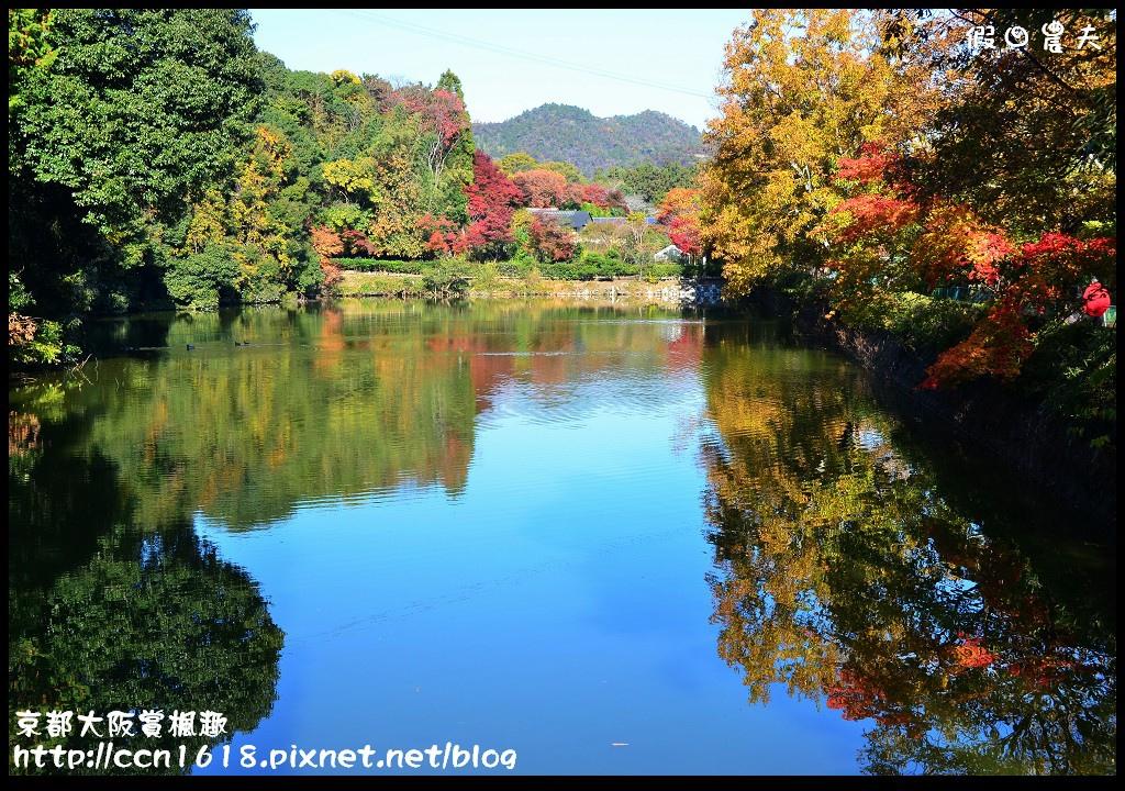 京都大阪賞楓趣DSC_4239
