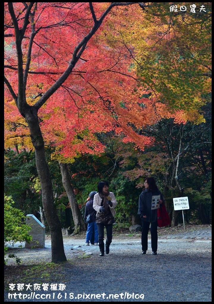京都大阪賞楓趣DSC_4652