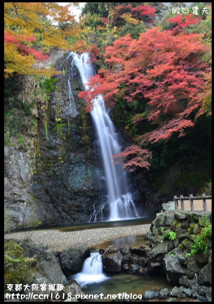 京都大阪賞楓趣DSC_6497