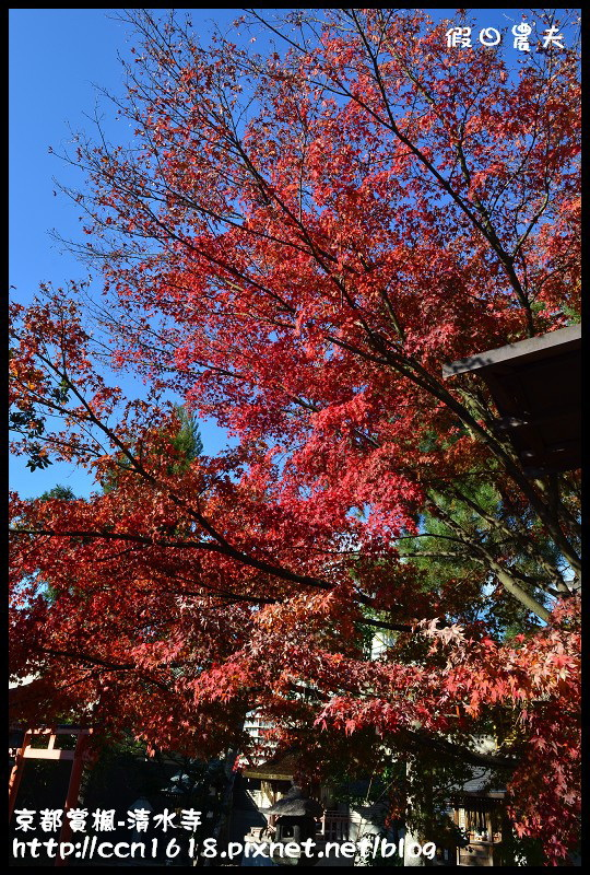 京都賞楓-清水寺DSC_2763