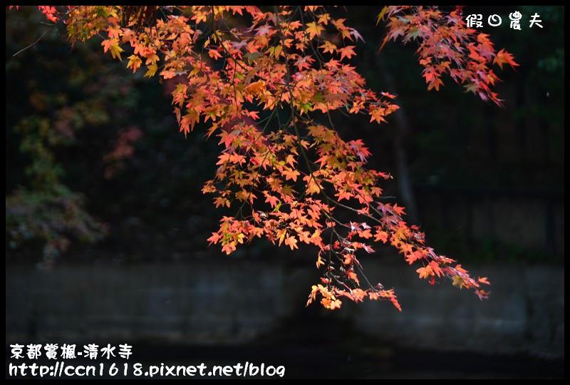 京都賞楓-清水寺DSC_2867