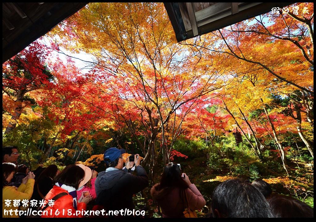 京都常寂光寺DSC_4395