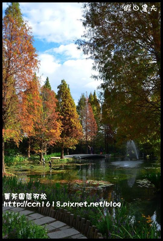 菁芳園落羽松DSC_0369