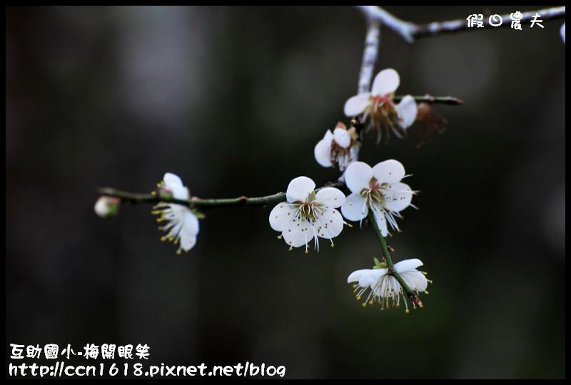互助國小-梅開眼笑DSC_0674