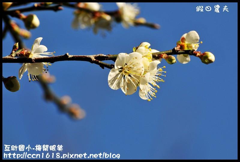 互助國小-梅開眼笑DSC_0679