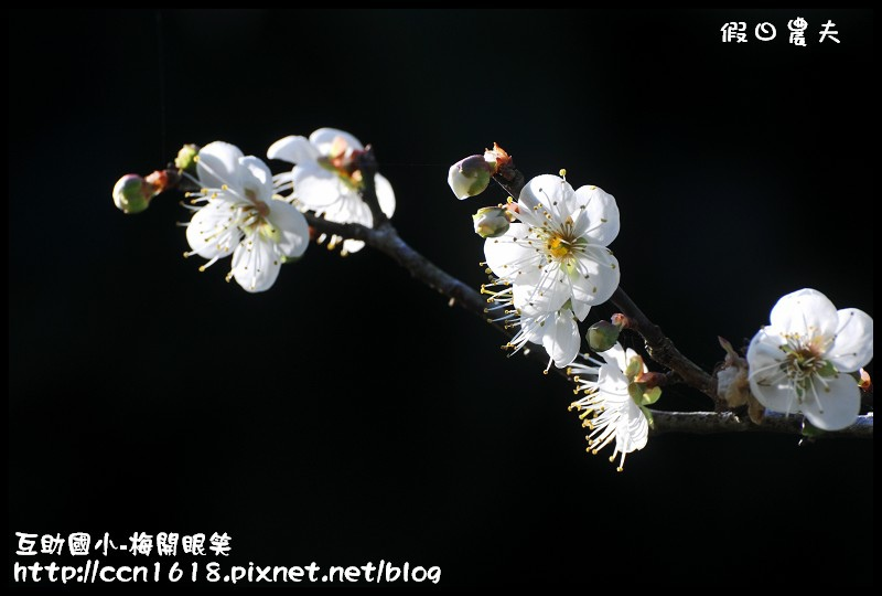 互助國小-梅開眼笑DSC_0684