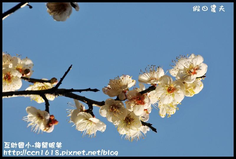 互助國小-梅開眼笑DSC_0752