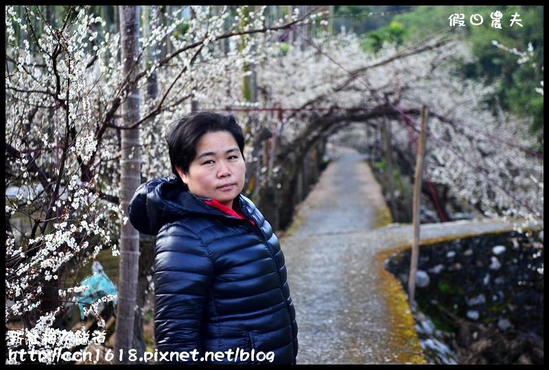 新社梅花隧道DSC_1078