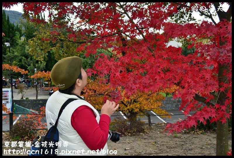 京都賞楓-金戒光明寺DSC_3151