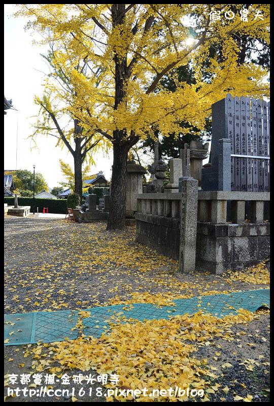 京都賞楓-金戒光明寺DSC_3182