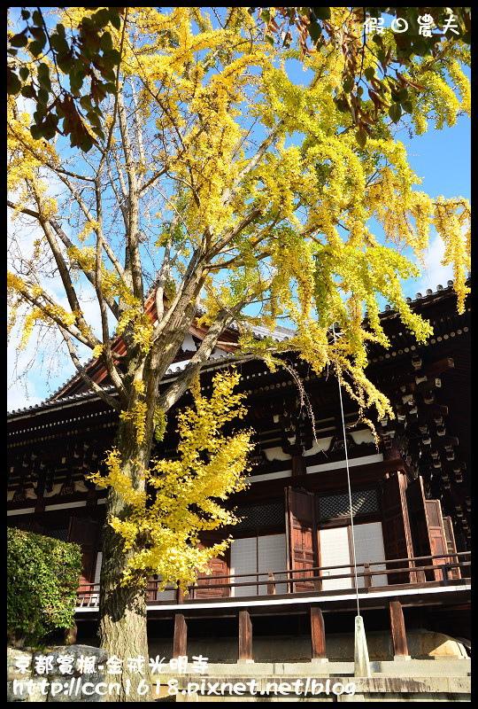 京都賞楓-金戒光明寺DSC_3191
