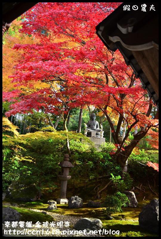 京都賞楓-金戒光明寺DSC_3213
