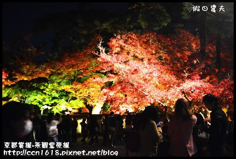 京都賞楓-永觀堂夜楓DSC_3638