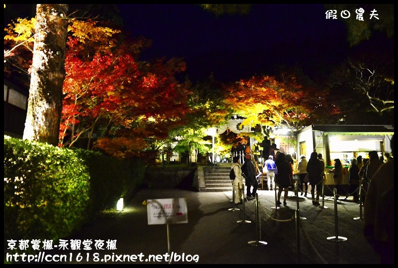 京都賞楓-永觀堂夜楓DSC_3642