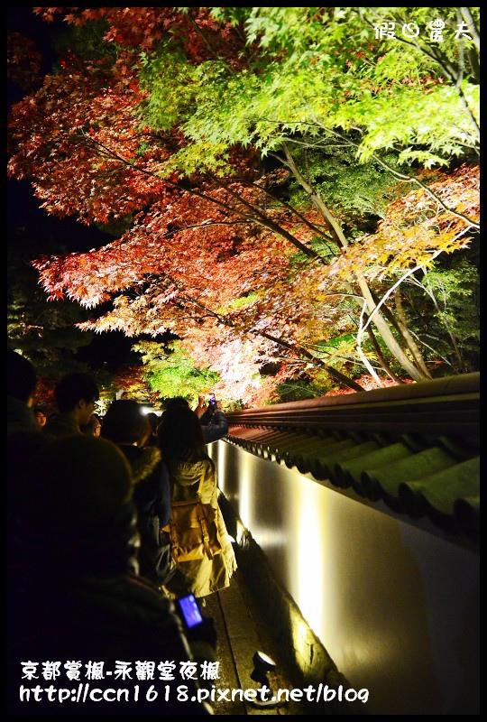 京都賞楓-永觀堂夜楓DSC_3650