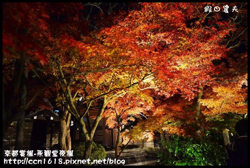 京都賞楓-永觀堂夜楓DSC_3661